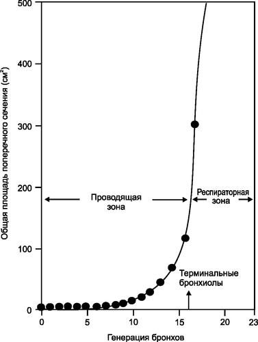 Диаграмма, демонстрирующая резкое возрастание площади поперечного сечения дыхательных путей в респираторной зоне в соответствии с моделью Weibel