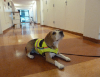 Собаки доказали свою способность находить внутрибольничные инфекции